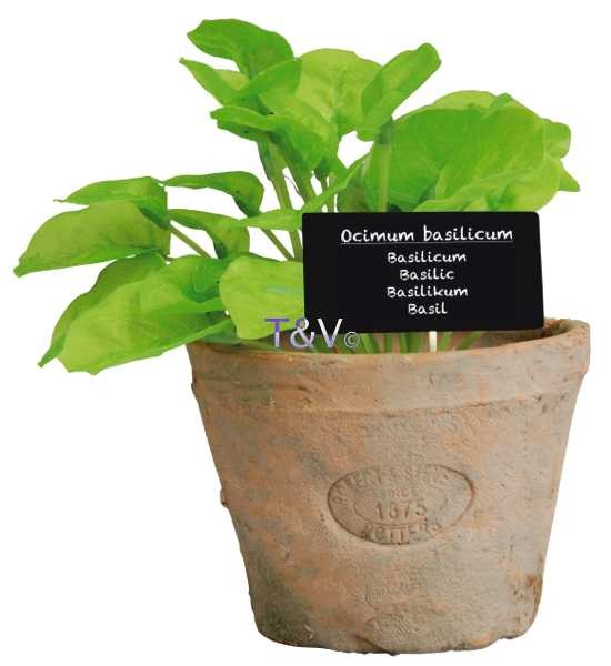 Esschert Design Basil in Aged Terracotta pot Large (AH008 - 8714982086922) | Trends & Vision