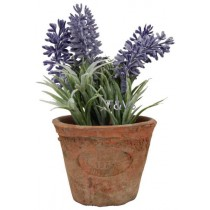 Esschert Design Lavender in Aged Terracotta pot Small | Trends & Vision