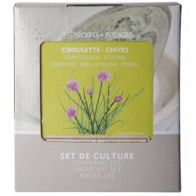 Growing sets - Chives
