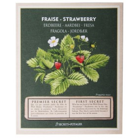 Seed packets - Strawberry