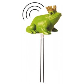 Humidiy snitch frog king