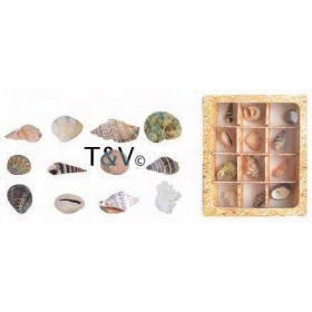 Shell collection in giftbox