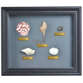 Shell collection in frame